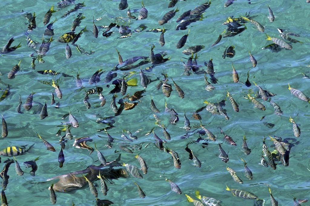 Fische 022