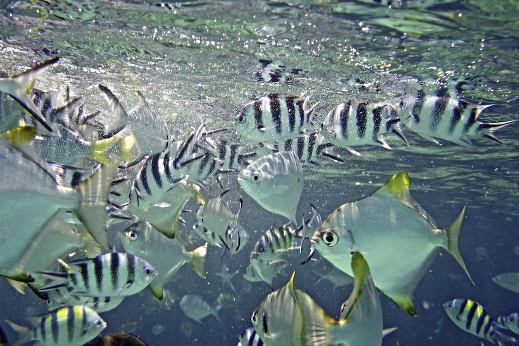 Fische 023