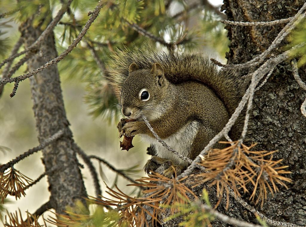 Squirrel 009