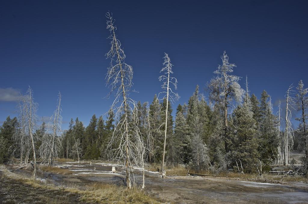 Trees UGB 003