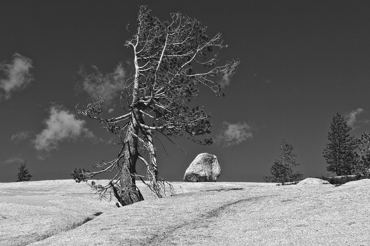 Moon, Rock and Tree 016
